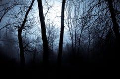 Ombre di umore in Misty Forest scura immagini stock libere da diritti