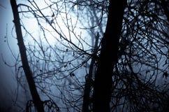 Ombre di umore in Misty Forest scura fotografie stock libere da diritti