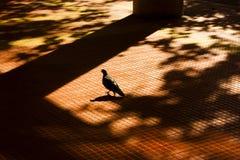 Ombre e siluette della città di autunno Fotografia Stock Libera da Diritti