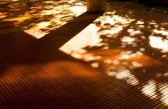 Ombre e siluette di architettura della città di autunno Immagini Stock