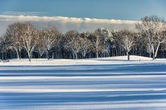 Ombre ed alberi Fotografia Stock