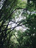 Ombre en bambou dans la forêt Image libre de droits