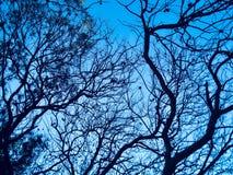 Ombre-figure de Branches' et le ciel bleu photographie stock libre de droits