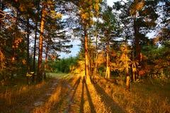 Ombre lunghe al tramonto Immagine Stock