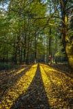 Ombre lunghe degli alberi che entrano in profondità in foresta in ritratto fotografia stock libera da diritti
