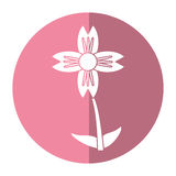 ombre naturelle de fleur d'amaryllis illustration libre de droits