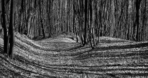 Ombre nella foresta fotografia stock