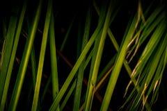 Ombre scure della palma Immagine Stock Libera da Diritti