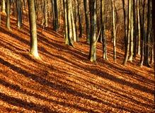 Ombre a strisce della foresta di autunno Immagini Stock