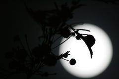 Ombre sulla luna Fotografia Stock Libera da Diritti