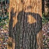 Ombre sur l'arbre Images stock