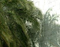 Ombre sur un mur de briques blanc des branches d'un palmier vert un jour ensoleillé images libres de droits