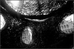 Ombre tessute Fotografie Stock