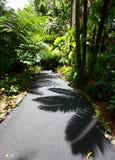 Ombre in una foresta pluviale tropicale Fotografia Stock Libera da Diritti