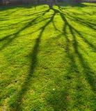 Ombre verdi dell'albero e del prato immagine stock libera da diritti