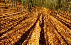 Ombreggia gli alberi del ot Fotografia Stock