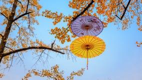 ombrelli fotografia stock
