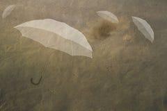 Ombrelli nel cielo Fotografie Stock Libere da Diritti