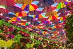 Ombrelli variopinti nel giardino di miracolo del Dubai Immagine Stock