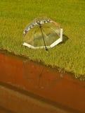 Ombrello su erba fotografia stock libera da diritti