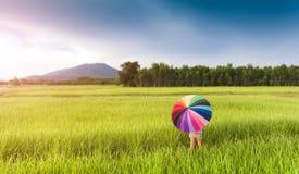 Ombrello variopinto nel giacimento verde del riso fotografie stock