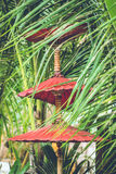 Ombrelloni rossi Fotografia Stock Libera da Diritti