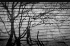 Ombres crépusculaires Ombre d'arbre réfléchie sur le mur Photo libre de droits