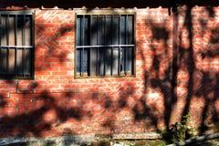 Ombres d'arbre sur la texture de mur Image stock