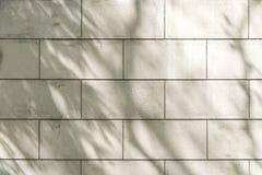 Ombres d'un arbre sur un mur blanc Images libres de droits
