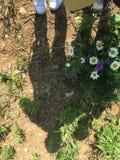 Ombres d'une maman et de son enfant au soleil image stock