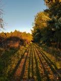 Ombres dans la forêt Image libre de droits