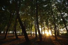 Ombres dans une forêt - baiser de nouveaux mariés dans les lumières du coucher du soleil Image libre de droits