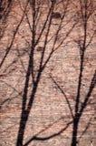Ombres de branches sur le mur de briques Photos stock