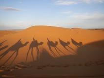 Ombres de caravane de chameau dans le désert du Sahara Image stock