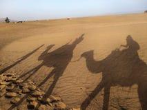 Ombres de chameau Photographie stock libre de droits