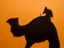 Ombres de chameau Image stock