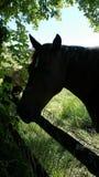 Ombres de cheval images libres de droits