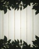 Ombres de feuillage Photographie stock