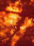Ombres de feuille sur la tente Hadyai, Songkhla, Thaïlande Photos libres de droits