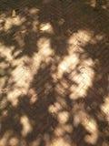 Ombres de feuille sur la vieille couche de surface de briques, Hadyai, Songkhla, Thaïlande Photographie stock libre de droits