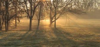 Ombres de matin photographie stock