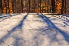 Ombres des arbres sur la route Photographie stock libre de droits
