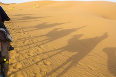 Ombres des chameaux Photos stock