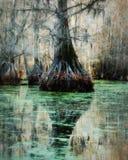 Ombres mystérieuses d'arbre photographie stock libre de droits