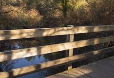 Ombres sur le pont en bois pendant l'heure d'or Fond de chute images stock