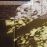 Ombres vert pâles abstraites de lumière du soleil Photo stock