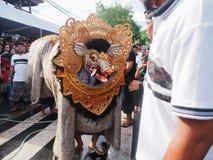 Omed Omedan巴厘岛 免版税图库摄影
