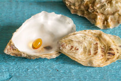 Omega 3 pill in oyster Royalty Free Stock Photos