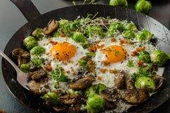 Omelette végétale avec l'oeuf et les pousses d'oeil de taureaux Photos stock