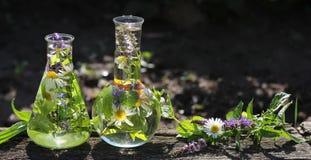 Omeopatia e cucinare con le erbe Fotografie Stock